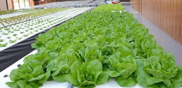 无土栽培水培技术——你想了解的问题都在这!